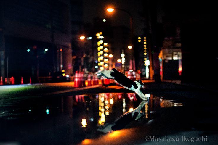 BLOG「路上のルール」 〜東京の街に暮らす野良猫たちの記録写真〜: 雨上がりの跳躍