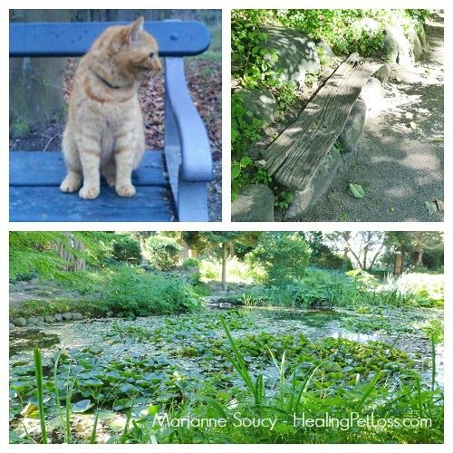 """""""A Sacred Meeting In A Magical Garden"""" - a guided Meditation for connecting with your beloved pet in the afterlife http://healingpetloss.com/pet-loss-meditation-a-sacred-meeting/ #petloss #meditation (created by Marianne Soucy, Healing Pet Loss)"""