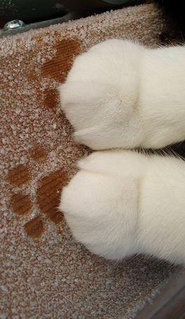 渋る 猫くんの体重測定。 Paws