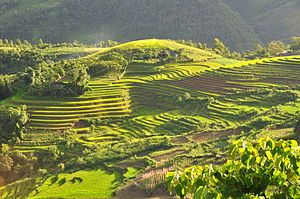terraced rice fields, Sapa, Vietnam (northwest)...traveling there was rough, but would do it again in a heartbeat.