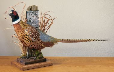 Cabela's Mounted Ring-Necked Pheasant - Repinning just because it's Cabela's