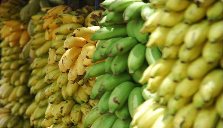 Come risparmiare milioni di dollari creando una semplice banana biotech