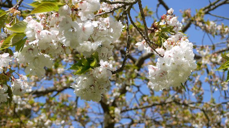 I love spring Photo taken by myself