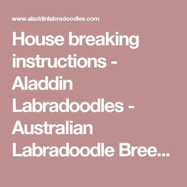 House breaking instructions - Aladdin Labradoodles - Australian Labradoodle Breeder - Puppies