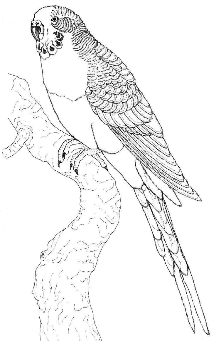 Ausmalbilder für Kinder Malvorlagen und malbuch • Papagei Bilder Zum Ausmalen