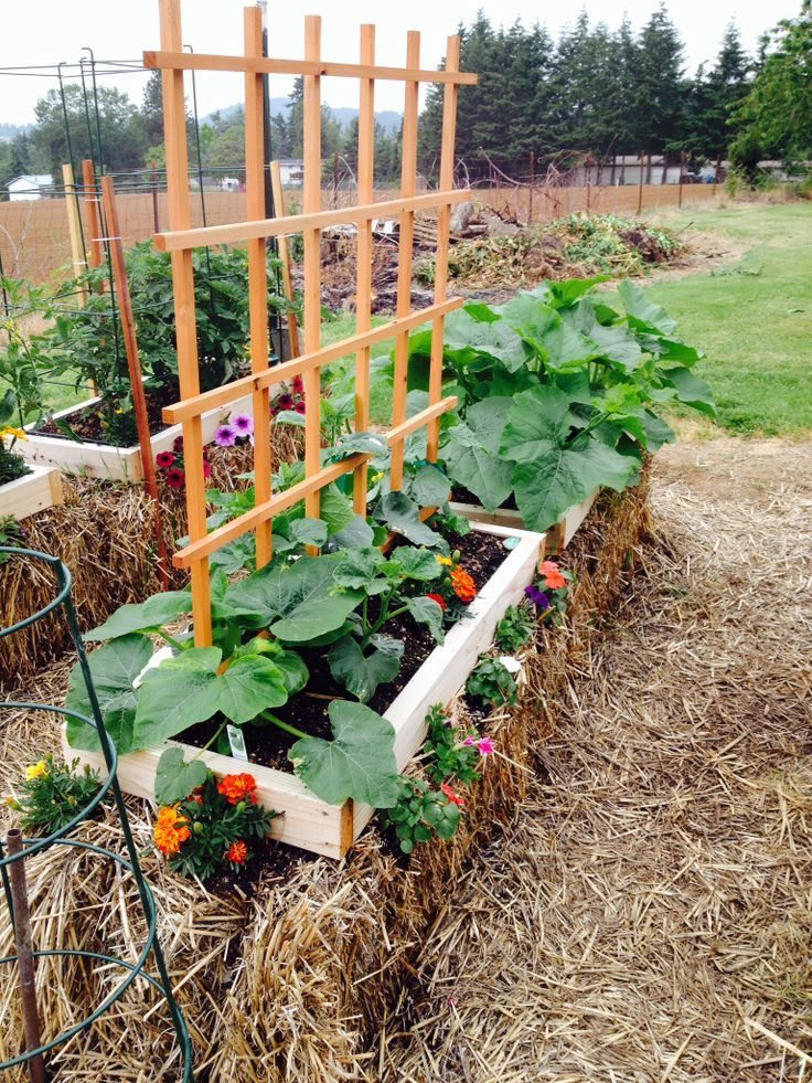 Find This Pin And More On STRAW BALE GARDENING.