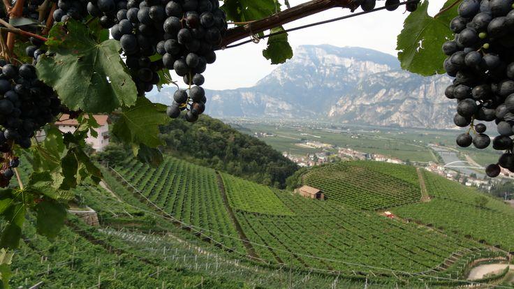 Mezzacorona, Trentino, Italia.  Land of Teroldego!
