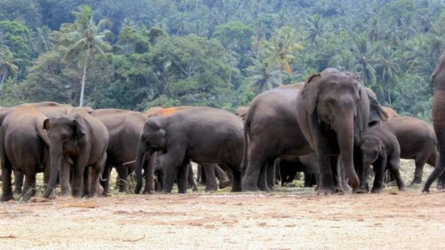 "Trains Stopped in Dooars to Save Jumbos   The Northeast Frontier Railway on Tuesday halted train services in Dooars region for six hours after receiving information about movement of elephant herds in the areas near Rajabhatkhowa station in Alipurduar an official said. ""Northeast Frontier Railway has stopped movement of all trains in the Alipurduar Junction-Siliguri section from 8.55am on Tuesday morning"" Pranav Jyoti Sharma the Chief Public Relations Officer of Northeast Frontier Railway…"