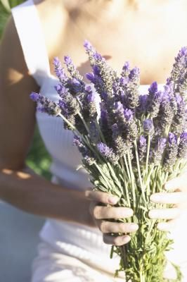 French impressionist artists created painterly canvases filled with images of lavender fields. A plant prized for its delicate, gray-green leaves and fragrant, purple blooms, lavender (lavandula) is ...