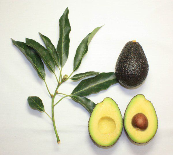 Avocado-substituted diet significantly changes lipid profile - http://scienceblog.com/482943/avocado-substituted-diet-significantly-changes-lipid-profile/