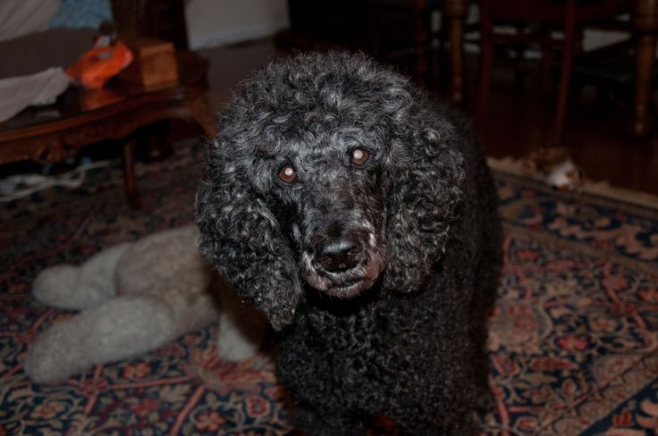 I've talked with all kinds of dogs, learn more about that at http://animalhealings.com/dog-behavior.html