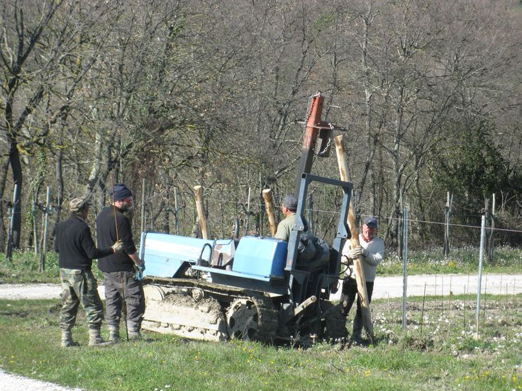 New vineyard! Le Caselle www.oliocimicchi.com/en/le-caselle-aggiornamento-buona-pasqua/