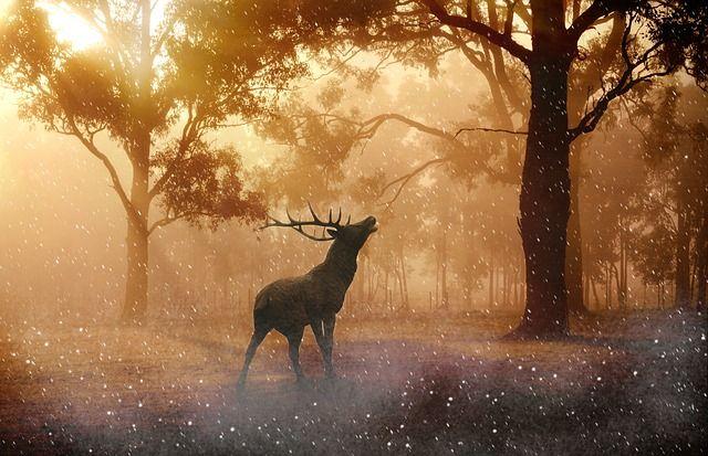 Hirsch, Wild, Geweih, Natur, Wald, Wiese, Lichtstimmung