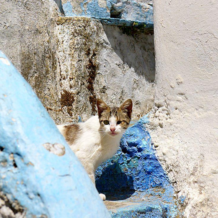 Tinos, Cyclades, Greece ph.no266, 25.05.2016 | cat