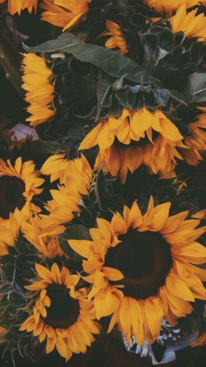 A Good Wallpaper Sunflower Wallpaper Sunflower Iphone Wallpaper Flower Phone Wallpaper