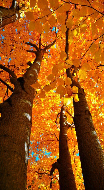 ~ Autumn In Boston ~