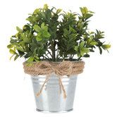 Boxwood Plant in Tin Bucket with Twine Edge