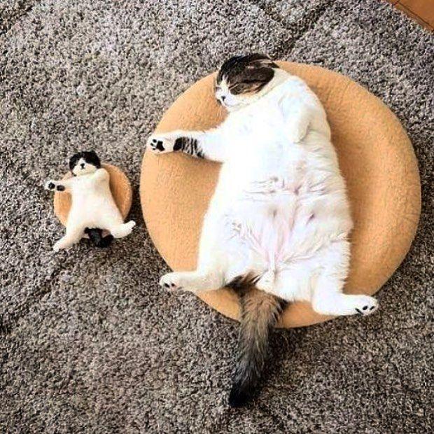 Pin De Silva Miguel En Cats Kittens Gatitos Divertidos Gatos Bonitos Gatitos Adorables
