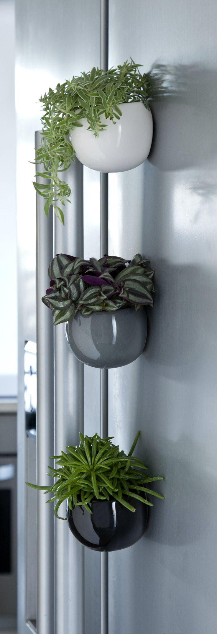 Miniplanter i magnetiske krukker er perfekte til den lille bolig, hvor man mangler noget grønt. #miniplanter #minikrukker #magnetiskekrukker #plantertilsmåhjem #miniplant #minipot #magneticpot #plantorama