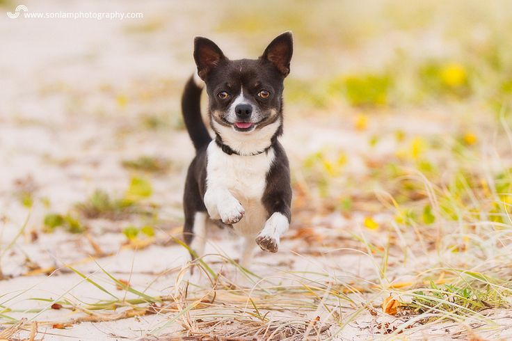 Pablo & Pedro The Dream Team – Sutherland Shire Pet Photography