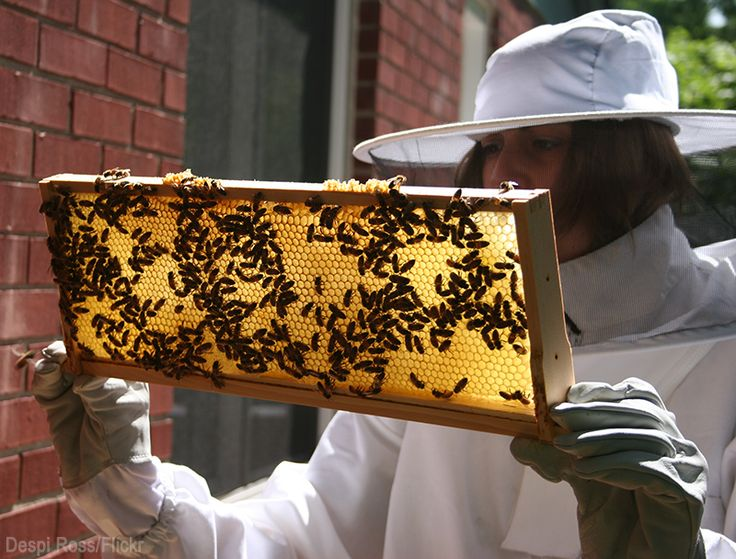 Turn your beekeeping hobby to a moneymaking endeavor with