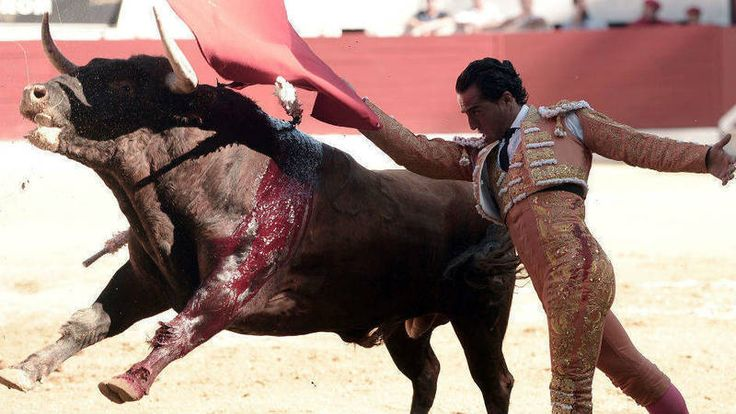 · Government of Spain Petition: Change bullfights · Change.org