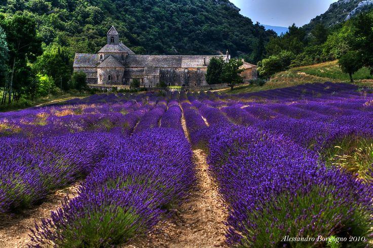 Abbaye de Sénanque - Provence – France / by Alessandro Borgogno