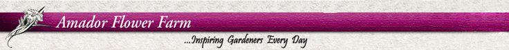 Amador Flower Farm On-line Store!