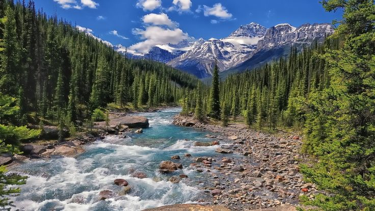 Earth River  Mountain Forest Banff National Park Banff Alberta Canada Mistaya River Wallpaper