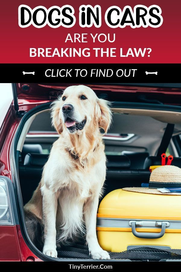 7 Easy Ways To Keep Your Dog Safe In The Car Dog Car Dogs Dog