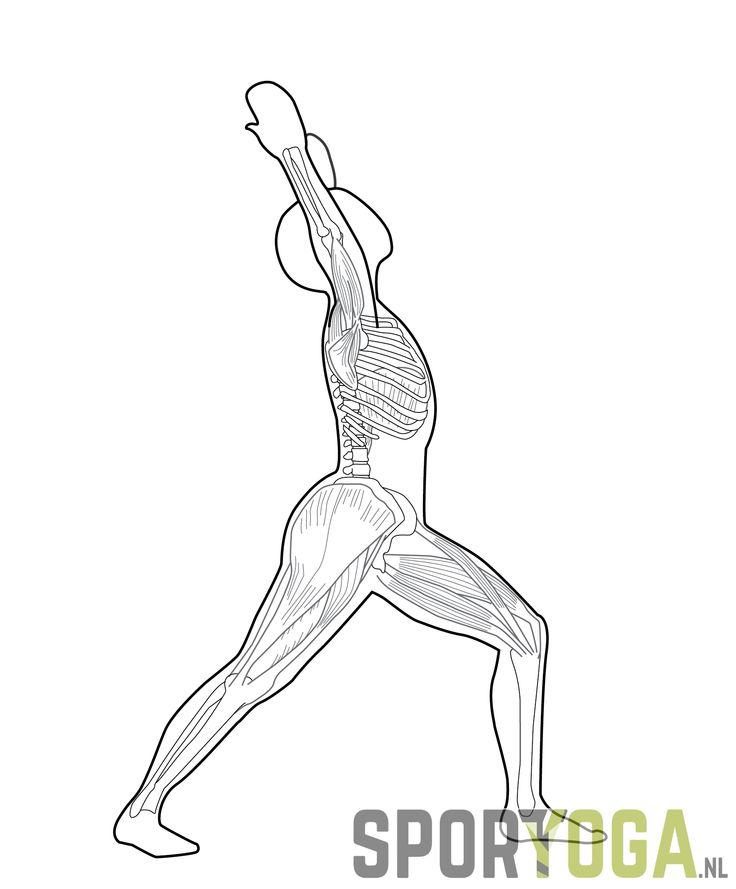 shoulder leg back chest stretch yoga from sportyoga.nl