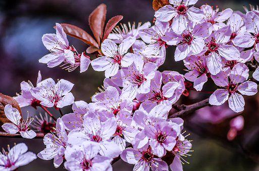 Jaro, Květ, Sluníčko, Jarní Květiny
