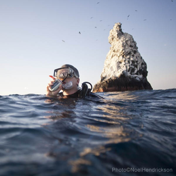 Diving the beautiful water of Socorro with the friendly giant Mantas, Dolphins and Humpback whales getting off course is easy to do - a Lifeline is a must have tool in case you surface without your fellow divers.