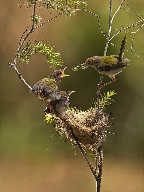 Was für ein tolles Bild , die Vogel-Mama kümmert sich rührend um ihre kleinen Piepser.