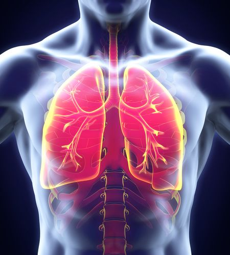 According to an animal study, retinoic acid receptor might help defend lungs against smoking and viral infections. Research showed that cigarette smoke exposure induced a protein to drastically reduce the strength of the retinoic acid receptor in mice. They found that the retinoic acid receptor becomes even more weakened by viral infections. The results suggest that re-establishing retinoic acid's protective function may reduce damage to the lungs.