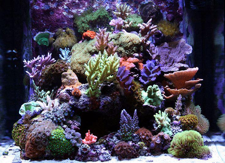 PodRod - 2009 Featured Nano Reefs - Featured Aquariums - Monthly Featured Nano Reef Aquarium Profiles - Nano-Reef.com Forums #aquarium