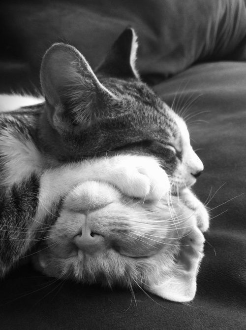 ☆ ive seen a lot of cats snuggling and sleeping together, but this is a first: Cats, Animals, Kitten, Sweet, Catnap, Cat Nap, Pet, Feline, Kitty