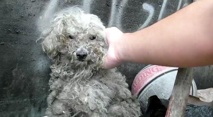 sauvetage d'un chien aveugle