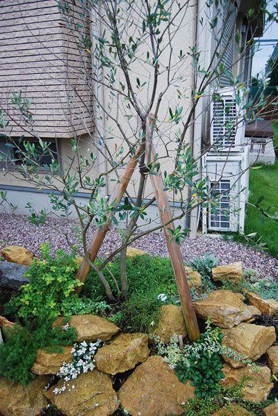 ロックガーデン風植栽2