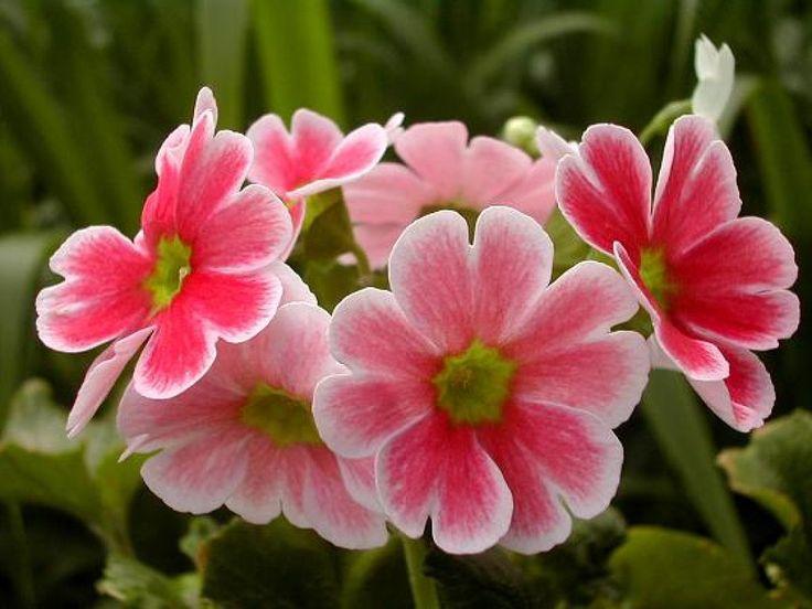 ¡Más flores bonitas!