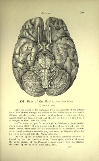 descriptive anatomy text, 1887, the brain