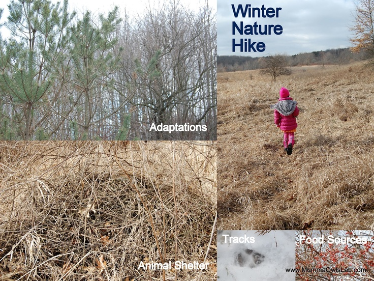 Tips for taking a winter nature hike with your child.