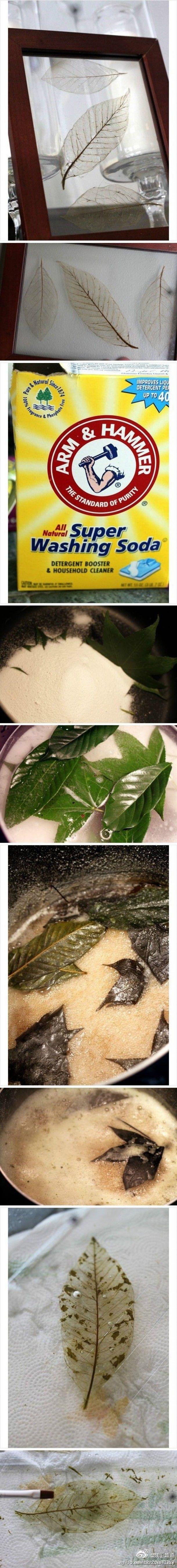 Hebben! | Decoratieblaadjes zelf maken van echte bladeren Door konnie