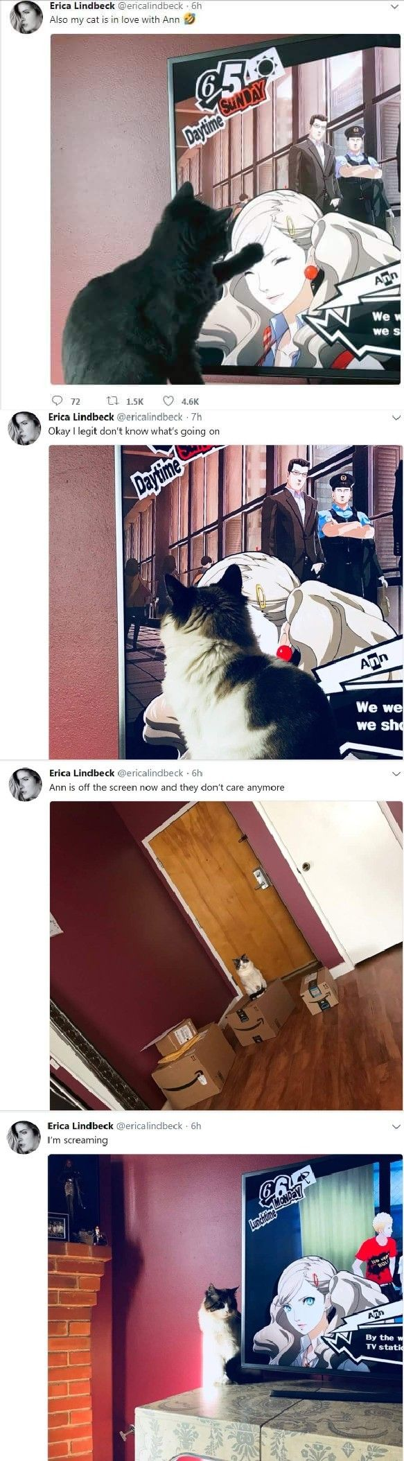 Well, first morgana and now tgis cat? Ann sure is a cat whisperer