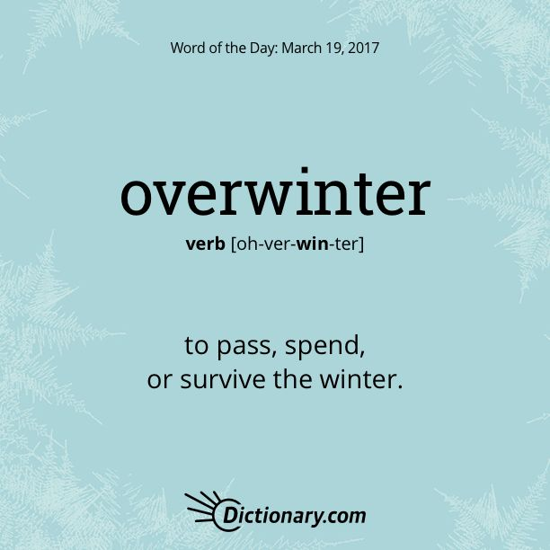 Dictionary.com's Word of the Day - overwinter - to pass, spend, or survive the winter: to overwinter on the Riviera.