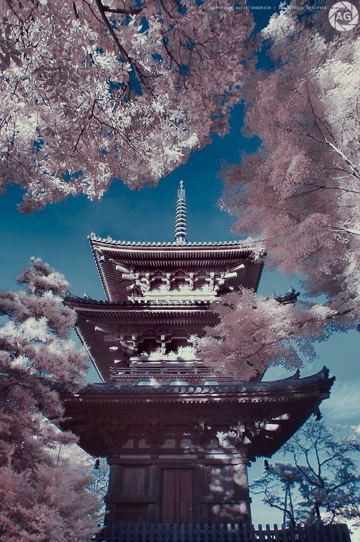 Cherry blossoms from momiji: Sankeien Gardens, Yokohama, Japan...sin duda magico