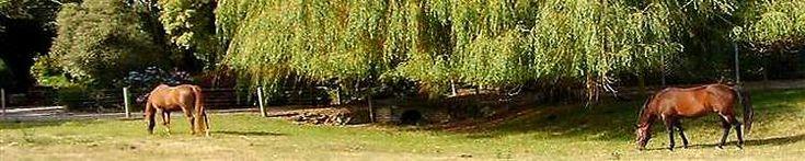 New Zealand - Warwickz Farm rare breed animals, luxury farm stay and bed & breakfast in Canterbury New Zealand