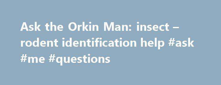 Ask the Orkin Man: insect – rodent identification help #ask #me #questions http://questions.remmont.com/ask-the-orkin-man-insect-rodent-identification-help-ask-me-questions/  #ask the # Ask the Orkin Man Ask the Orkin Man We have answers for any pest question. Search Popular Questions Question: When is the best time for termite treatment? Answer: Start now! Termite protection includes treatment and prevention. In addition to treating current problems, we identify conditions that attract…