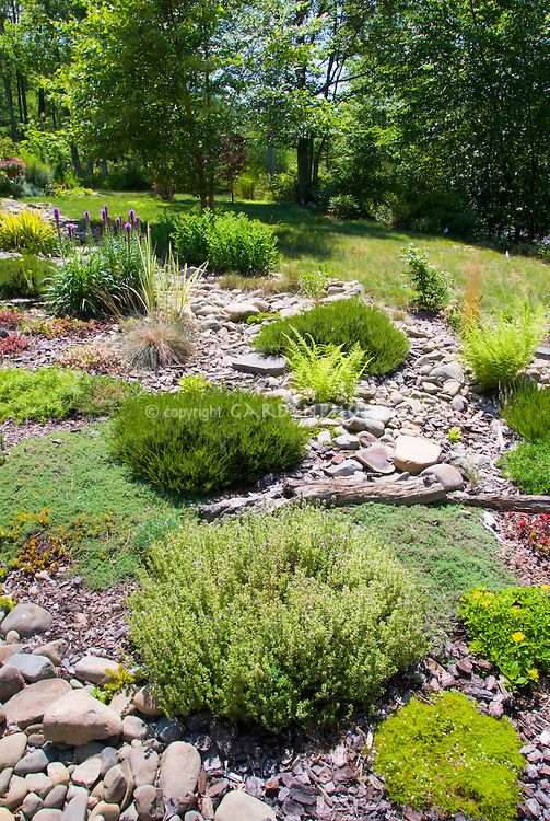 Hillisde plantings, Sunny Rocky sloped alpine rock garden with many tough drought-tolerant plants in sun in summer, herb Thymus thymes, Sagina, ferns, sedum, liatris, calluna heather shrubs, ornamental grasses, mixture of plants