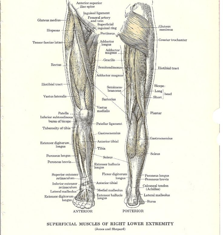 23 best Anatomy Reference images on Pinterest   Anatomy reference ...